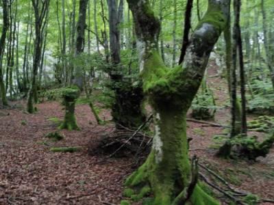 Parque Natural de Urkiola;parque natural sierra de mariola viaje picos de europa puente san isidro s